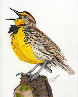 Meadowlark Drawing - Solitary Song by Cathleen Lengyel