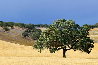 Photograph - Solitary Stance - Oak Tree, California by KJ Swan