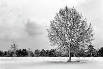 Photograph - Solitary by Travis Rogers
