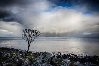 Photograph - Solitary Tree by Alex Leonard
