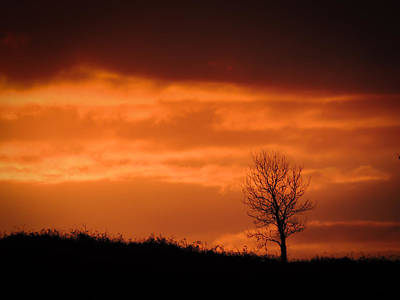 Photograph - Solitary Tree At Sunset by James Truett