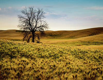 Photograph - Solitary Tree by Chris McKenna