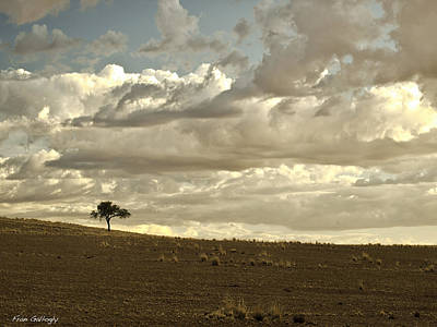 Photograph - Solitary Tree by Fran Gallogly