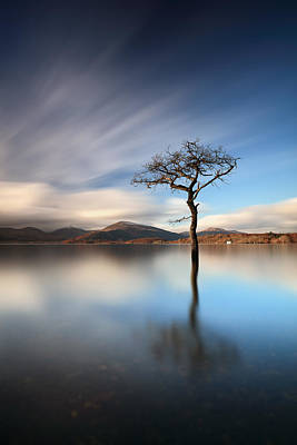 Photograph - Solitary Tree by Grant Glendinning