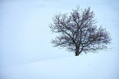 Photograph - Solitary Tree In Snow by Rick Berk