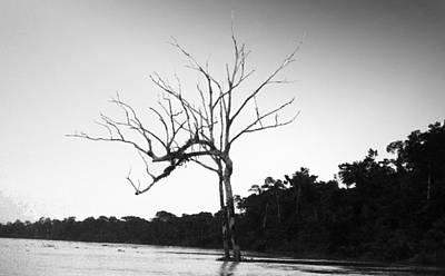 Photograph - Solitary Tree by Muyiwa OSIFUYE