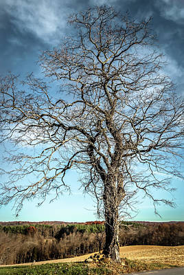 Photograph - Solitary Tree by Wayne King