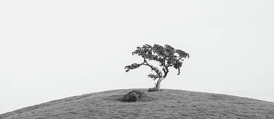 Photograph - Solitary Valley Oak by Alexander Kunz