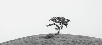 Photograph - Solitary Valley Oak by Alexander Kunz
