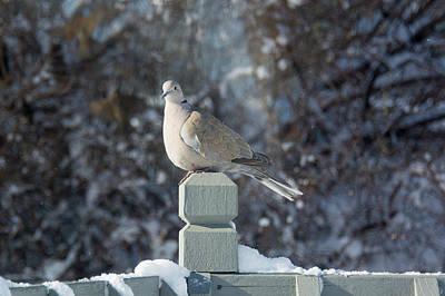 Photograph - Solitary Wait by Linda Larson