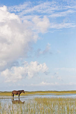 Art Print featuring the photograph Solitary Wild Horse by Bob Decker