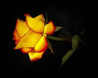 Artistic License Digital Art - Solitary Yellow Rose by Raven Deel