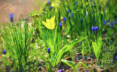 Photograph - Solitary Yellow - Tulip Art by Kerri Farley