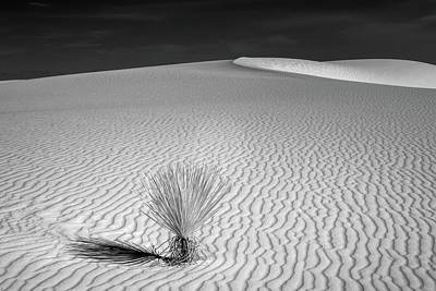Photograph - Solitary Yucca by James Barber