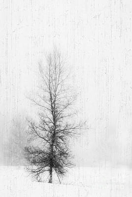 Art Print featuring the photograph Solitude  by Alana Ranney
