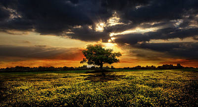 Photograph - Solitude At Sunset  by Debra and Dave Vanderlaan