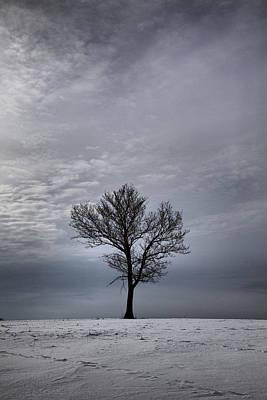 Photograph - Solitude by CA  Johnson