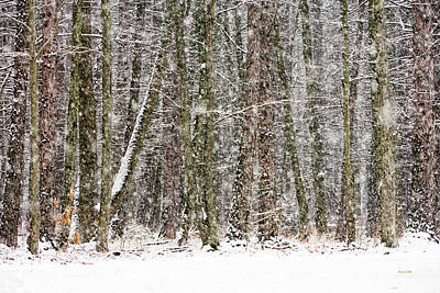 Photograph - Winter Solitude by Christina Rollo