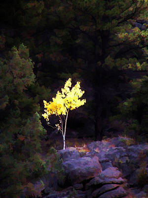 Photograph - Solitude by Diane Alexander