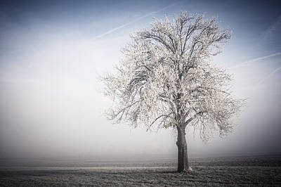 Photograph - Solitude Frost by Miguel Winterpacht