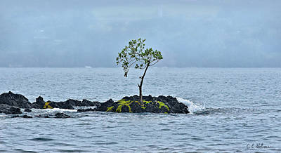 Photograph - Solitude In Hilo Bay by Christopher Holmes