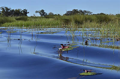 Photograph - Solitude In The Okavango by Don Mercer