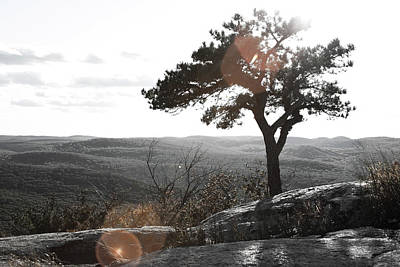 Photograph - Solitude by Jennifer Karon