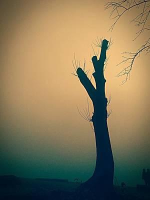 Photograph - Solitude by Lauren Williamson