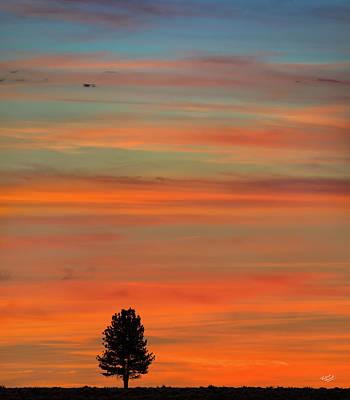 Photograph - Solitude by Leland D Howard