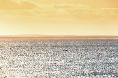 Photograph - Solitude Monkey Mia, Shark Bay by Dave Catley