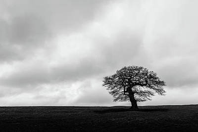Photograph - Solitude by Nick Bywater
