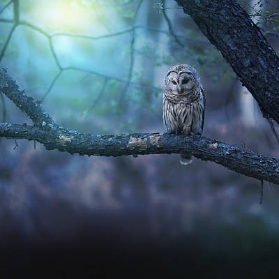 Owls Photograph - Solitude - Square by Rob Blair