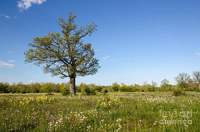 Photograph - Solitude Tree In Blossom Grassland by Kennerth and Birgitta Kullman