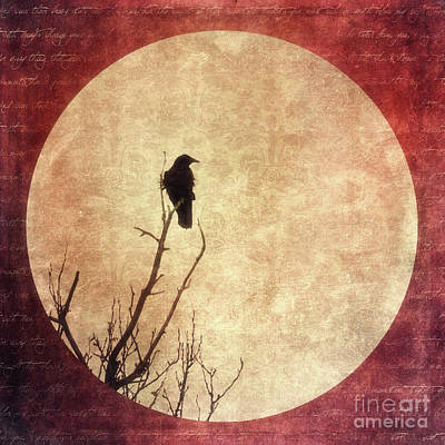 Crows Photograph - Solivagant by Priska Wettstein