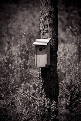 Photograph - Solo Bird House by Debra Forand