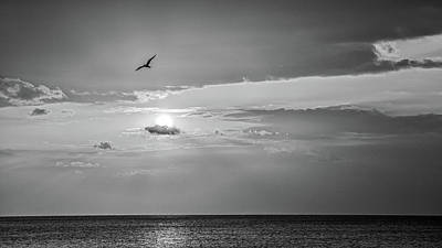 Photograph - Solo Flight Bw by Penny Meyers