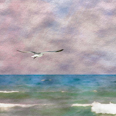 Photograph - Solo Flight by Erwin Spinner
