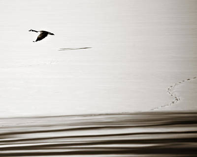 Photograph - Solo Flight by Marilyn Hunt