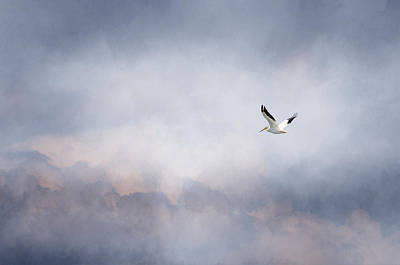 Photograph - Solo Flight by Susan McMenamin
