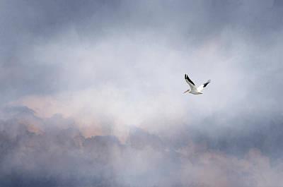 Photograph - Solo Flight by Susan McMenamin