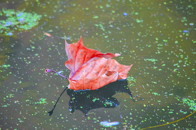 Photograph - Solo Floating Red Leaf by Jeff at JSJ Photography