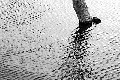 Photograph - Solo by Hitendra SINKAR