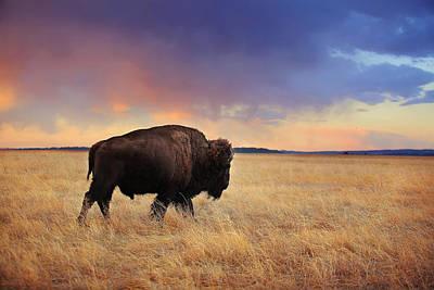 Photograph -  March Across The Prairie by Deborah Johnson