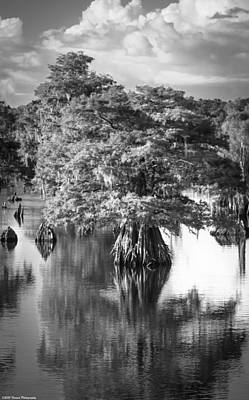 Photograph - Solo Tree Dead Lakes Black And White by Debra Forand