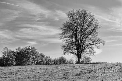 Photograph - Solo Tree In Field by Darleen Stry