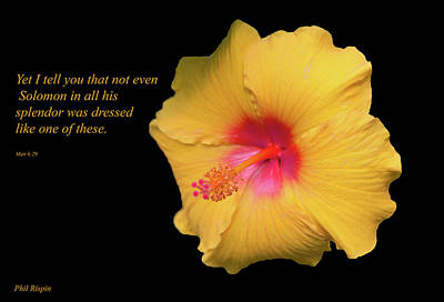 Photograph - Solomon And The Hibiscus by Phil Rispin