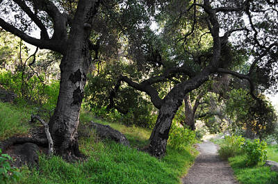 Solstice Canyon Live Oak Trail Art Print