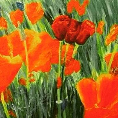Painting - Solvang Red Poppies Popping by Dorothy Visker