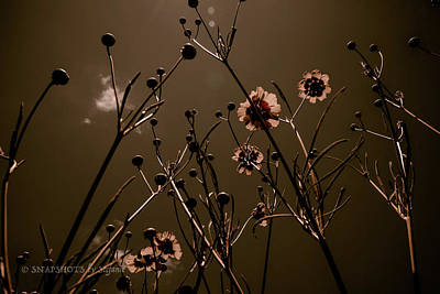 Photograph - Sombre Wildflowers by Stefanie Silva