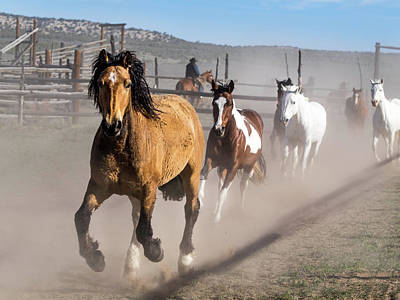 Photograph - Sombrero Ranch Horse Drive At The Corrals by Nadja Rider